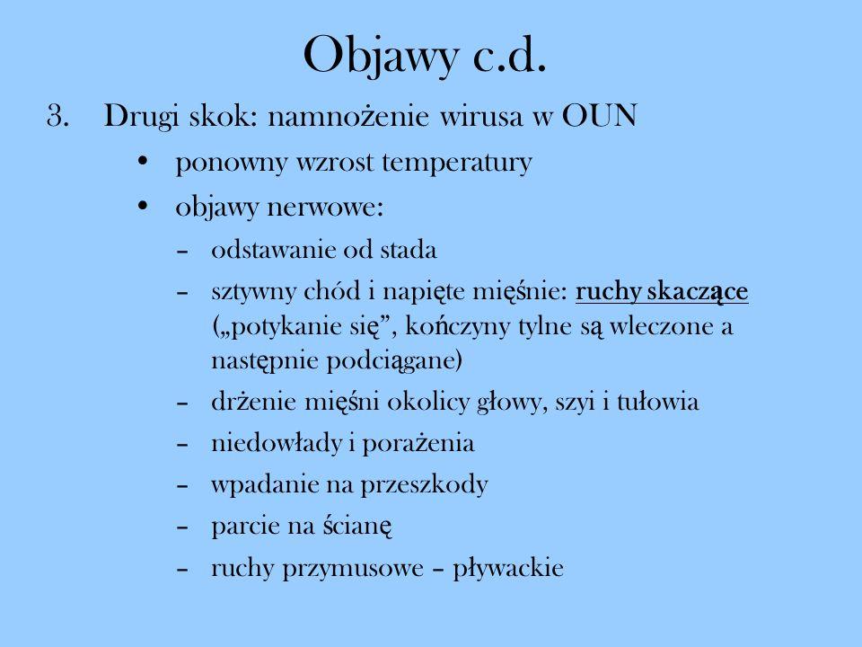 Objawy c.d. 3.Drugi skok: namno ż enie wirusa w OUN ponowny wzrost temperatury objawy nerwowe: –odstawanie od stada –sztywny chód i napi ę te mi ęś ni