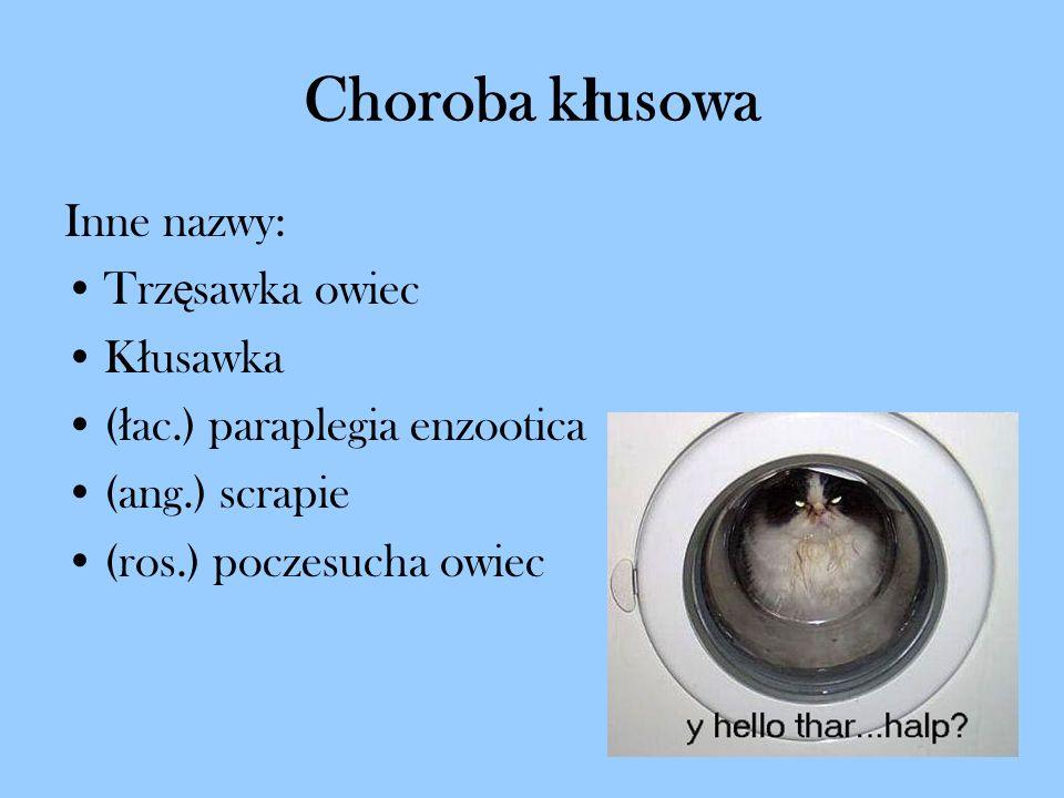Choroba k ł usowa Inne nazwy: Trz ę sawka owiec K ł usawka ( ł ac.) paraplegia enzootica (ang.) scrapie (ros.) poczesucha owiec