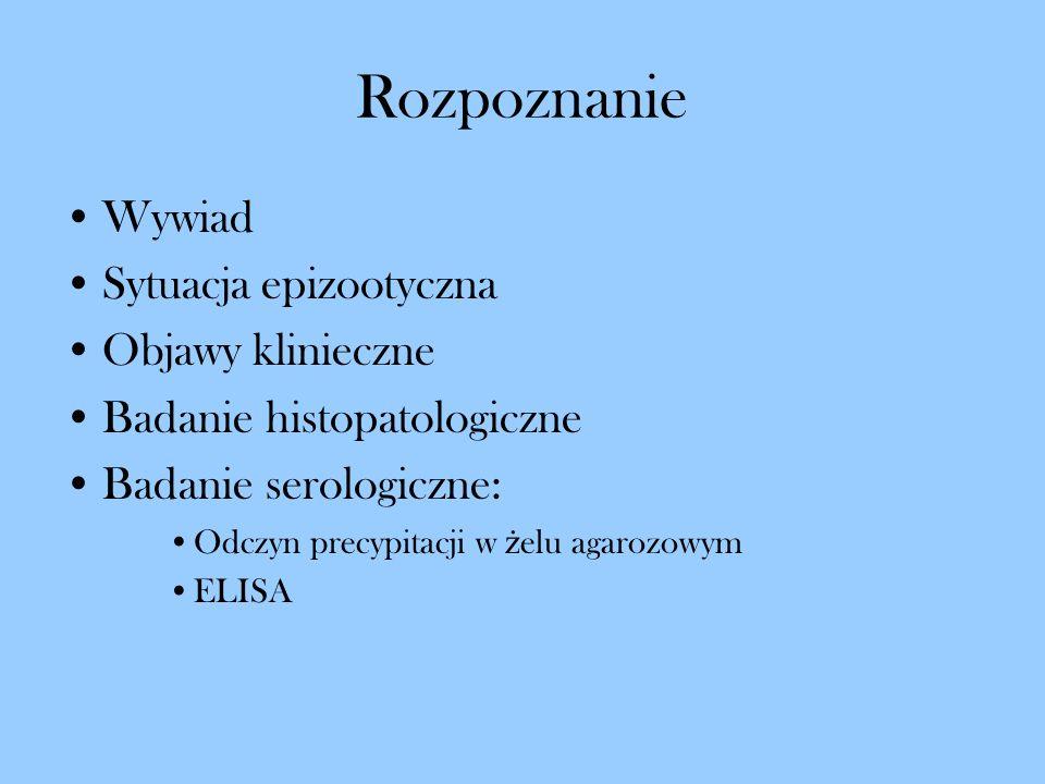 Rozpoznanie Wywiad Sytuacja epizootyczna Objawy klinieczne Badanie histopatologiczne Badanie serologiczne: Odczyn precypitacji w ż elu agarozowym ELIS