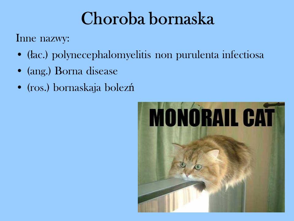 Choroba bornaska Inne nazwy: ( ł ac.) polynecephalomyelitis non purulenta infectiosa (ang.) Borna disease (ros.) bornaskaja bolez ń