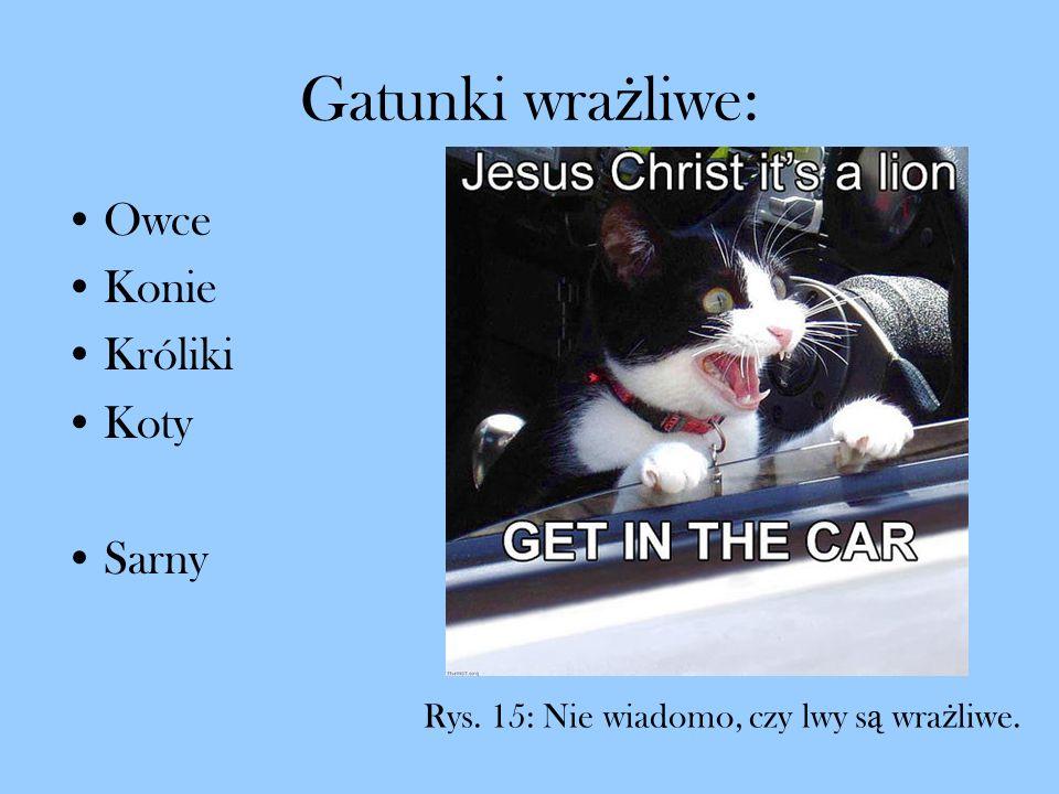 Gatunki wra ż liwe: Owce Konie Króliki Koty Sarny Rys. 15: Nie wiadomo, czy lwy s ą wra ż liwe.
