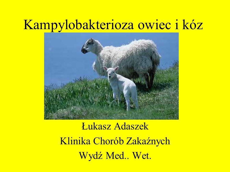 Kampylobakterioza owiec i kóz Łukasz Adaszek Klinika Chorób Zakaźnych Wydź Med.. Wet.