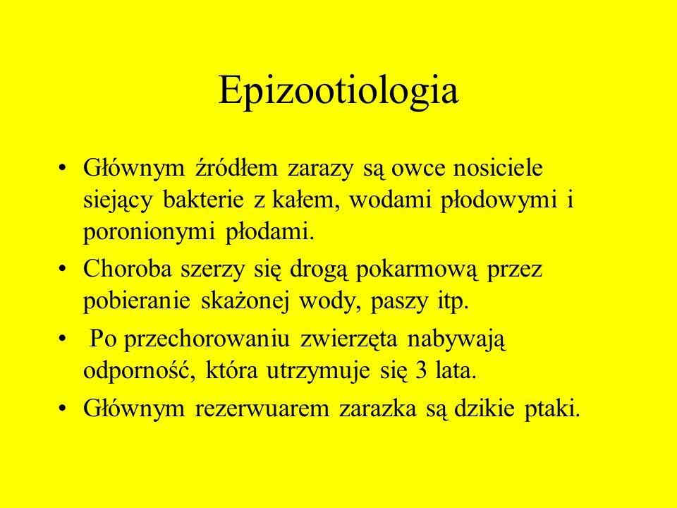 Epizootiologia Głównym źródłem zarazy są owce nosiciele siejący bakterie z kałem, wodami płodowymi i poronionymi płodami. Choroba szerzy się drogą pok