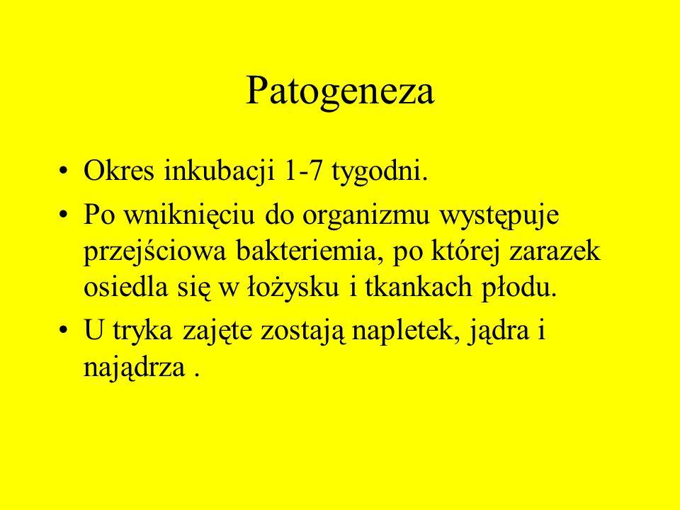 Patogeneza Okres inkubacji 1-7 tygodni. Po wniknięciu do organizmu występuje przejściowa bakteriemia, po której zarazek osiedla się w łożysku i tkanka
