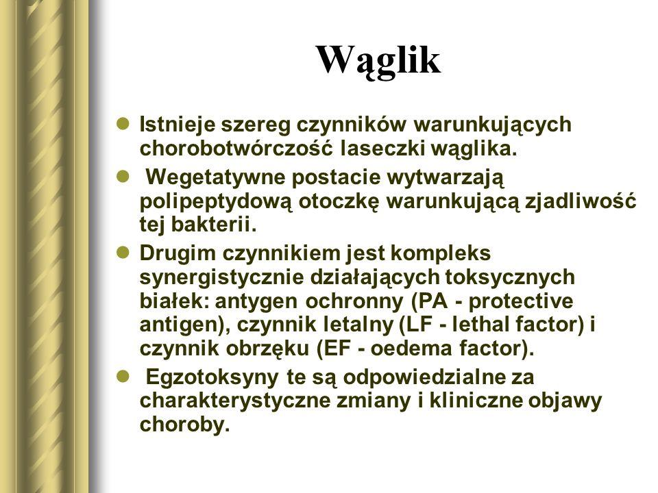 Wąglik Postacie wegetatywne laseczki wąglika są wrażliwe na szeroko stosowane środki dezynfekcyjne i ogrzewanie.