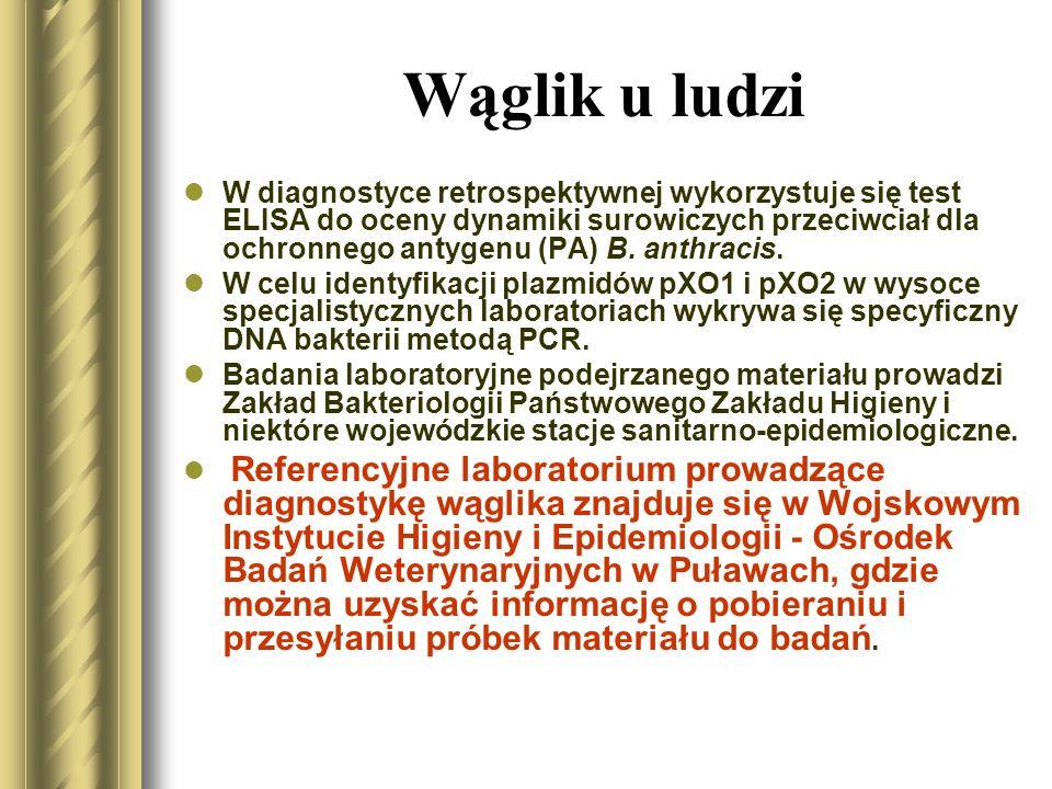 Wąglik u ludzi W diagnostyce różnicowej skórnej postaci wąglika należy uwzględnić: czyraczność, różycę, różę, pierwotną zmianę kiłową, dżumę, nosaciznę, ospę bydlęcą, ospę owczą (niesztowicę wirusową) i półpasiec; w postaci płucnej - ostre objawy oddechowe na innym tle, jak np.: błonicę, objawy infekcji wirusem Hanta, grypę, mykoplazmozę, legionellozę, krztusiec, dżumę płucną także gwałtownie rozwijający się guz w okolicu śródpiersia, pęknięcie tętniaka aorty; w postaci jelitowej - ostry przebieg choroby wrzodowej, dur brzuszny.