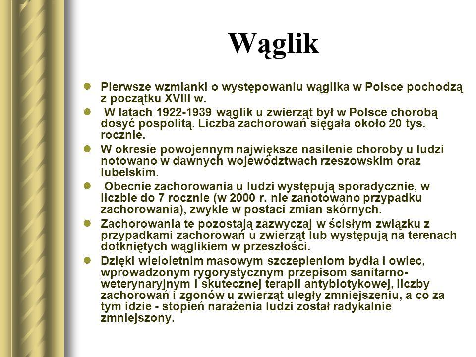 Wąglik Po raz pierwszy tlenową laseczkę Bacillus anthracis wyizolował w 1876 roku pracujący w Wolsztynie (teren ówczesnego zaboru pruskiego) Robert Koch.