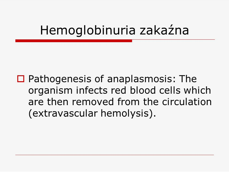 Hemoglobinuria zakaźna Pathogenesis of anaplasmosis: The organism infects red blood cells which are then removed from the circulation (extravascular h