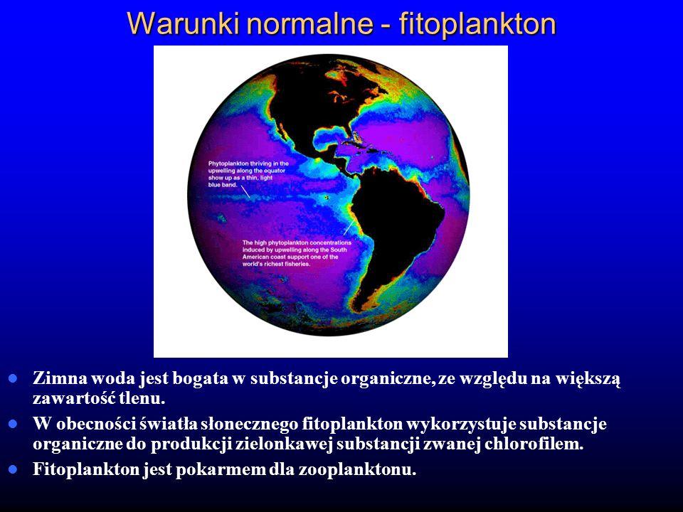 Warunki normalne - fitoplankton Zimna woda jest bogata w substancje organiczne, ze względu na większą zawartość tlenu. W obecności światła słonecznego