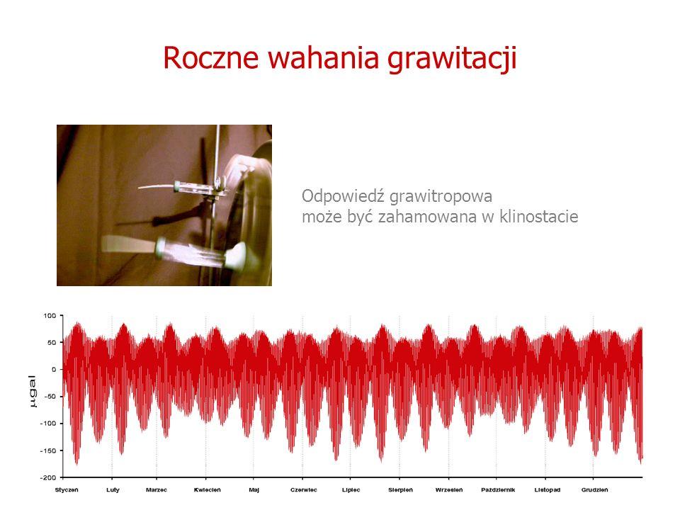 Roczne wahania grawitacji Odpowiedź grawitropowa może być zahamowana w klinostacie