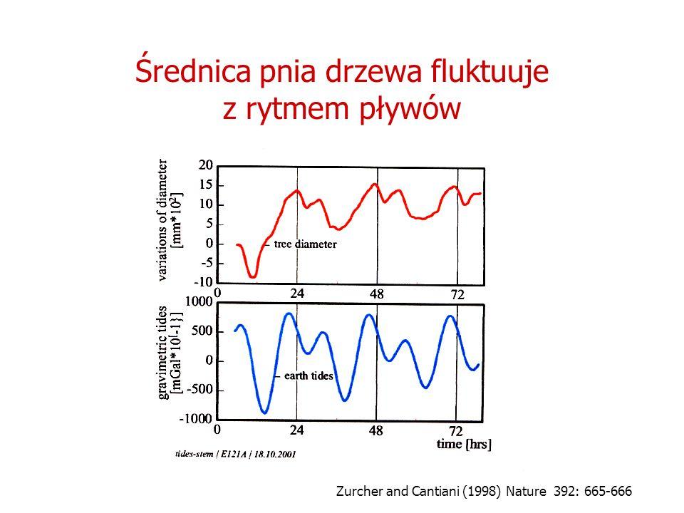 Średnica pnia drzewa fluktuuje z rytmem pływów Zurcher and Cantiani (1998) Nature 392: 665-666