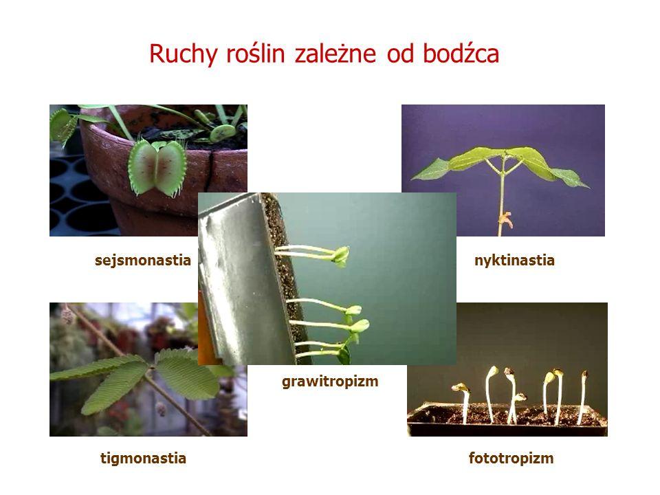 Ruchy roślin zależne od bodźca grawitropizm nyktinastia fototropizm sejsmonastia tigmonastia