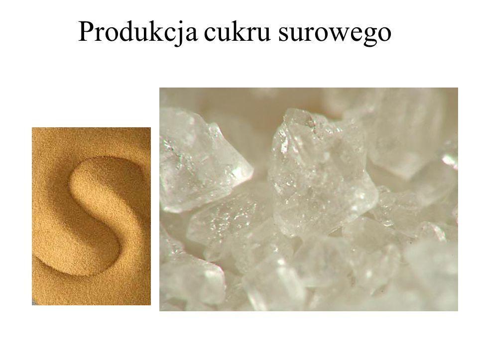 Produkcja cukru surowego