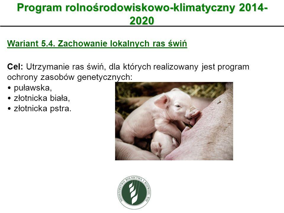 Wariant Program rolnośrodowiskowo-klimatyczny 2014- 2020 Wariant 5.4. Zachowanie lokalnych ras świń Cel: Utrzymanie ras świń, dla których realizowany