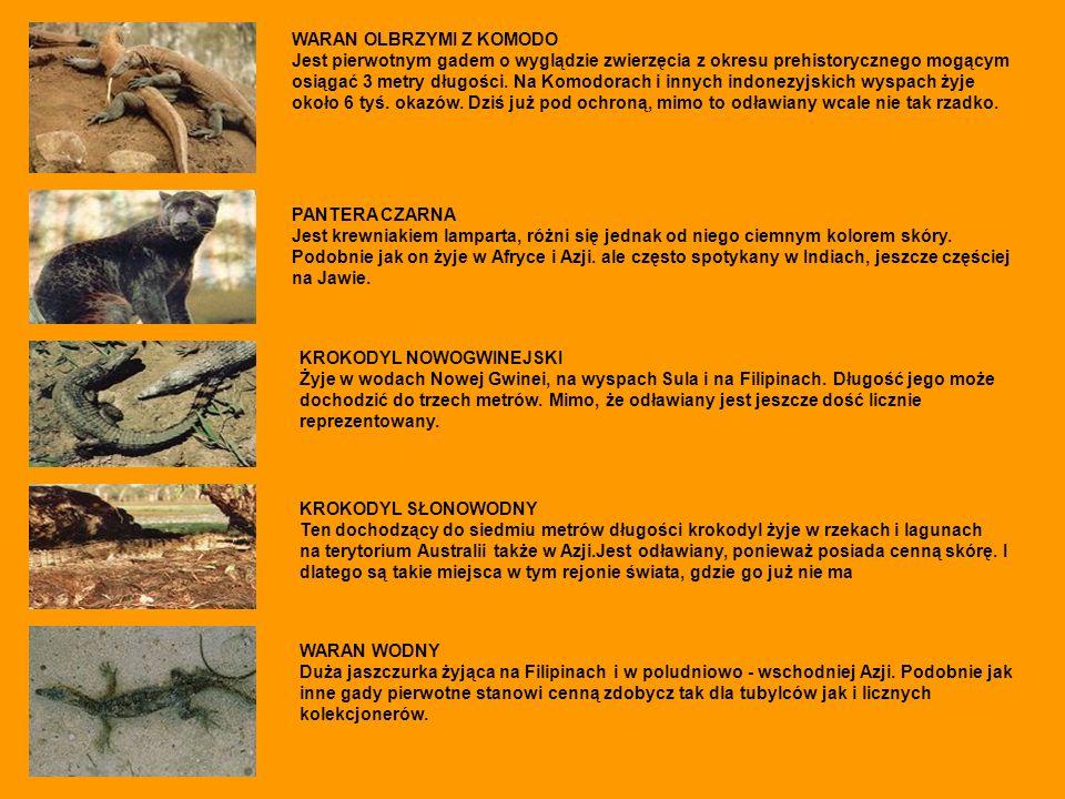 PANTERA CZARNA Jest krewniakiem lamparta, różni się jednak od niego ciemnym kolorem skóry. Podobnie jak on żyje w Afryce i Azji. ale często spotykany