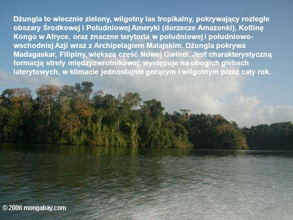Dżungla to wiecznie zielony, wilgotny las tropikalny, pokrywający rozległe obszary Środkowej i Południowej Ameryki (dorzecze Amazonki), Kotlinę Kongo