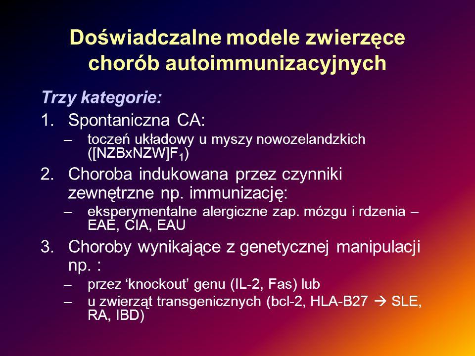 Doświadczalne modele zwierzęce chorób autoimmunizacyjnych Trzy kategorie: 1.Spontaniczna CA: –toczeń układowy u myszy nowozelandzkich ([NZBxNZW]F 1 )