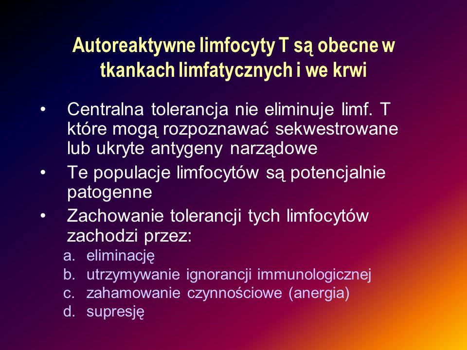 Autoreaktywne limfocyty T są obecne w tkankach limfatycznych i we krwi Centralna tolerancja nie eliminuje limf. T które mogą rozpoznawać sekwestrowane