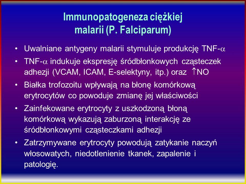Immunopatogeneza ciężkiej malarii (P. Falciparum) Uwalniane antygeny malarii stymuluje produkcję TNF- TNF- indukuje ekspresję śródbłonkowych cząstecze