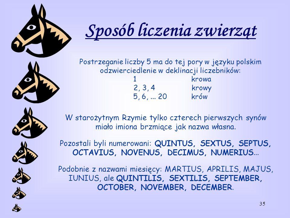35 Sposób liczenia zwierząt Postrzeganie liczby 5 ma do tej pory w języku polskim odzwierciedlenie w deklinacji liczebników: 1 krowa 2, 3, 4 krowy 5, 6,...