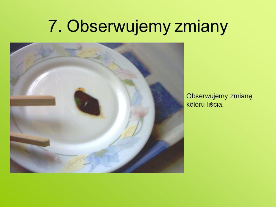 7. Obserwujemy zmiany Obserwujemy zmianę koloru liścia.
