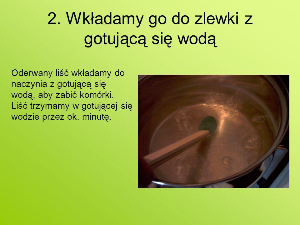 2. Wkładamy go do zlewki z gotującą się wodą Oderwany liść wkładamy do naczynia z gotującą się wodą, aby zabić komórki. Liść trzymamy w gotującej się