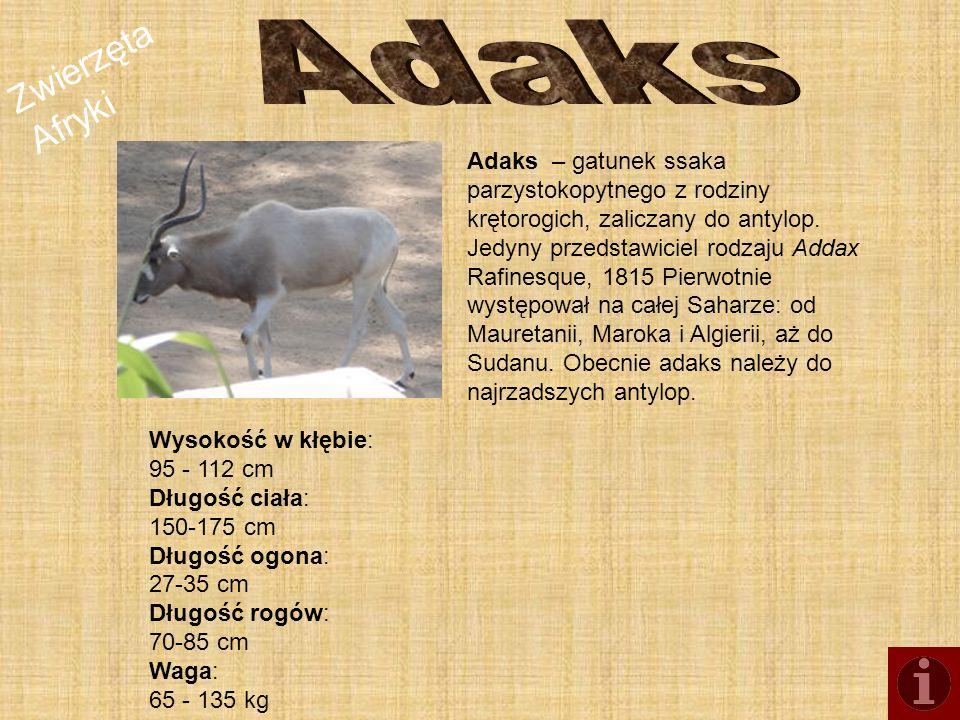 Zwierzęta Afryki Adaks – gatunek ssaka parzystokopytnego z rodziny krętorogich, zaliczany do antylop. Jedyny przedstawiciel rodzaju Addax Rafinesque,