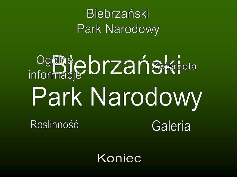 Źródła: Knaflewska J.Najciekawsze miejsca w Polsce Rzętała M., Jaguś A.