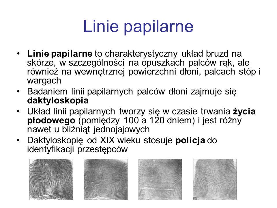 Linie papilarne Linie papilarne to charakterystyczny układ bruzd na skórze, w szczególności na opuszkach palców rąk, ale również na wewnętrznej powier