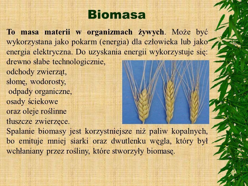 Biomasa To masa materii w organizmach żywych. Może być wykorzystana jako pokarm (energia) dla człowieka lub jako energia elektryczna. Do uzyskania ene