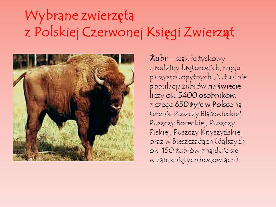 Wybrane zwierz ę ta z Polskiej Czerwonej Ksi ę gi Zwierz ą t Ż ubr – ssak ło ż yskowy z rodziny kr ę torogich, rz ę du parzystokopytnych. Aktualnie po