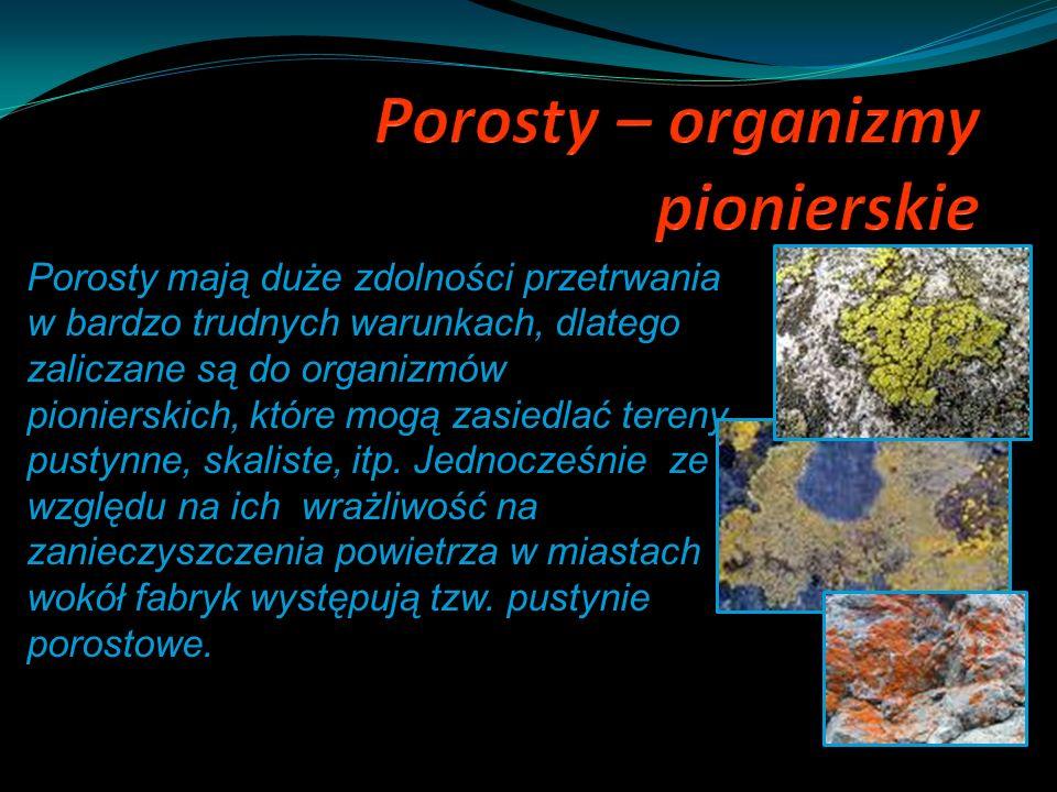 Porosty mają duże zdolności przetrwania w bardzo trudnych warunkach, dlatego zaliczane są do organizmów pionierskich, które mogą zasiedlać tereny pust