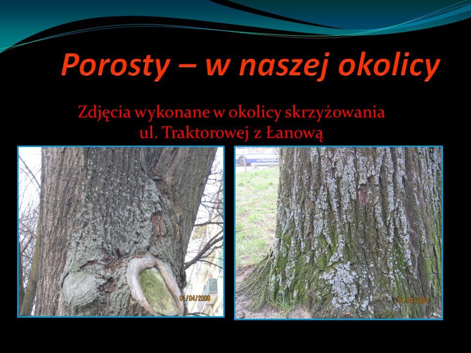 Zdjęcia wykonane w okolicy skrzyżowania ul. Traktorowej z Łanową