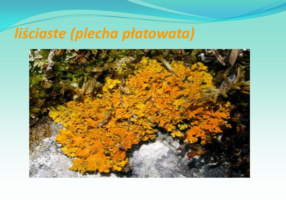 liściaste (plecha płatowata)