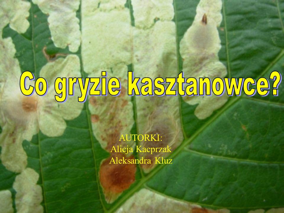 AUTORKI: Alicja Kacprzak Aleksandra Kluz
