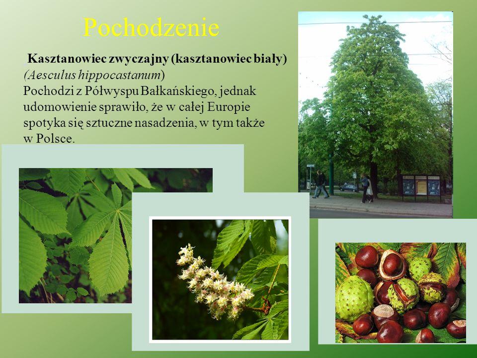 Poprzez szkodliwe działanie gąsienic następuje znaczące zmniejszenie możliwości asymilacyjnej liści ( a co za tym idzie, całego drzewa), przez co zahamowany zostaje przyrost pędów, a także zmniejszenie ilości lub zanik owoców.
