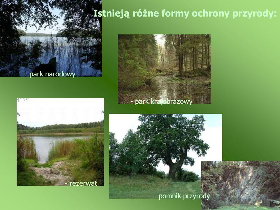 - pomnik przyrody - park narodowy Istnieją różne formy ochrony przyrody: - park krajobrazowy - rezerwat