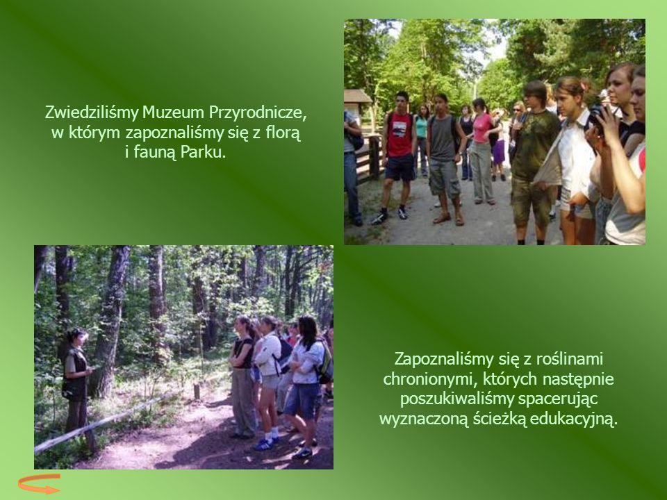 Zapoznaliśmy się z roślinami chronionymi, których następnie poszukiwaliśmy spacerując wyznaczoną ścieżką edukacyjną. Zwiedziliśmy Muzeum Przyrodnicze,