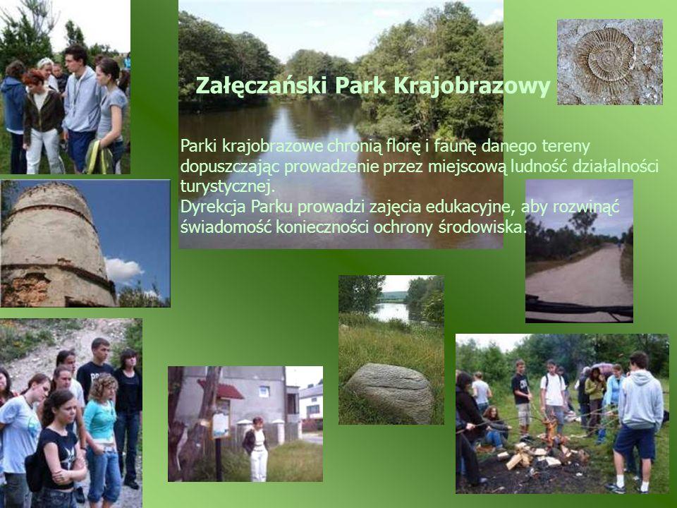 Załęczański Park Krajobrazowy Parki krajobrazowe chronią florę i faunę danego tereny dopuszczając prowadzenie przez miejscową ludność działalności tur