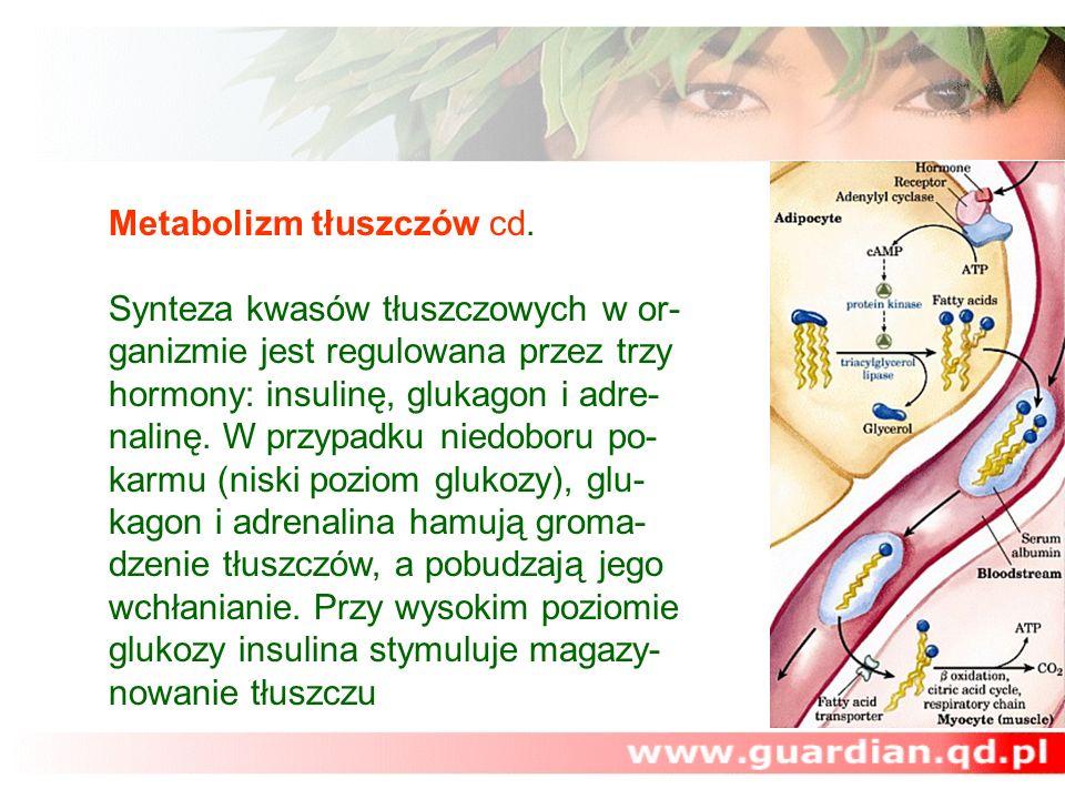 Metabolizm tłuszczów cd. Synteza kwasów tłuszczowych w or- ganizmie jest regulowana przez trzy hormony: insulinę, glukagon i adre- nalinę. W przypadku