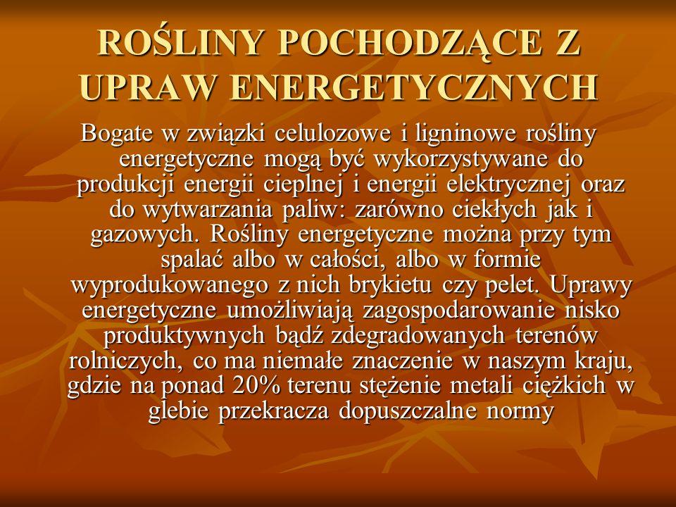 ROŚLINY POCHODZĄCE Z UPRAW ENERGETYCZNYCH Bogate w związki celulozowe i ligninowe rośliny energetyczne mogą być wykorzystywane do produkcji energii ci