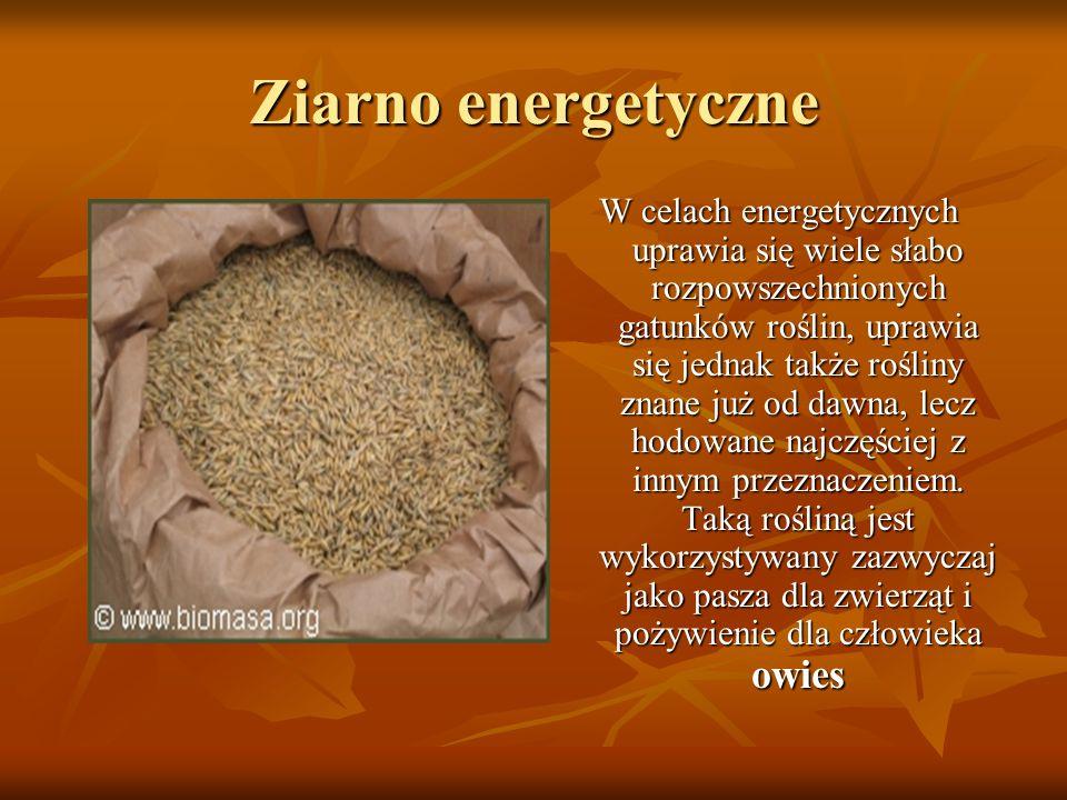 Ziarno energetyczne W celach energetycznych uprawia się wiele słabo rozpowszechnionych gatunków roślin, uprawia się jednak także rośliny znane już od