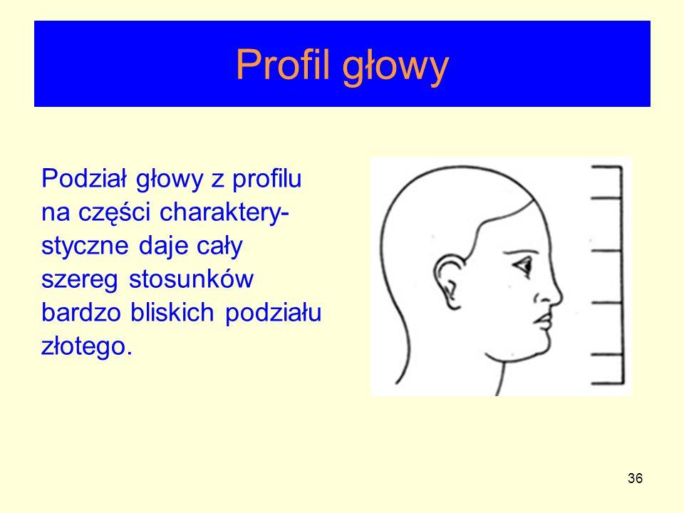 36 Profil głowy Podział głowy z profilu na części charaktery- styczne daje cały szereg stosunków bardzo bliskich podziału złotego.