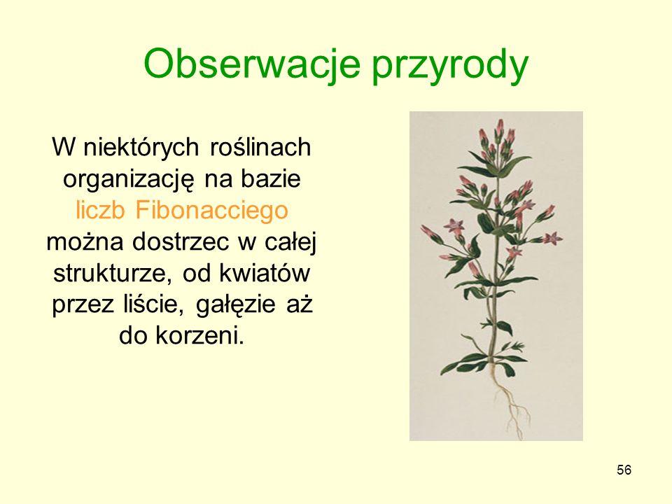 56 W niektórych roślinach organizację na bazie liczb Fibonacciego można dostrzec w całej strukturze, od kwiatów przez liście, gałęzie aż do korzeni. O