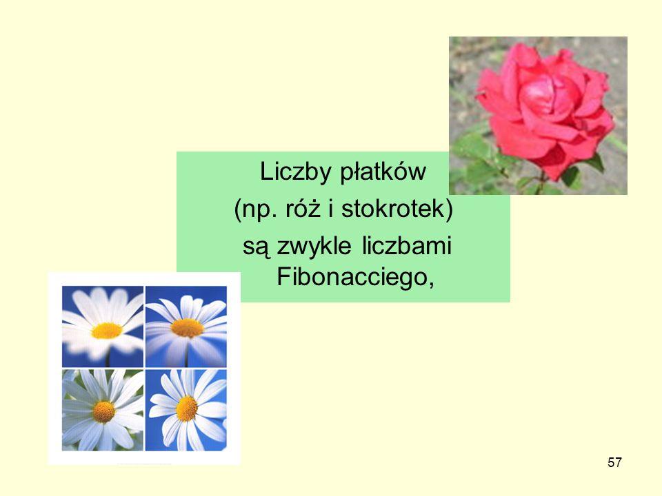 57 Liczby płatków (np. róż i stokrotek) są zwykle liczbami Fibonacciego,