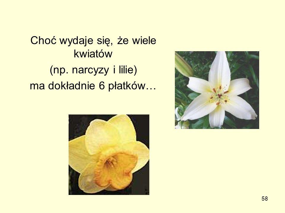 58 Choć wydaje się, że wiele kwiatów (np. narcyzy i lilie) ma dokładnie 6 płatków…
