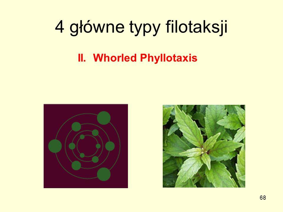 68 4 główne typy filotaksji II. Whorled Phyllotaxis