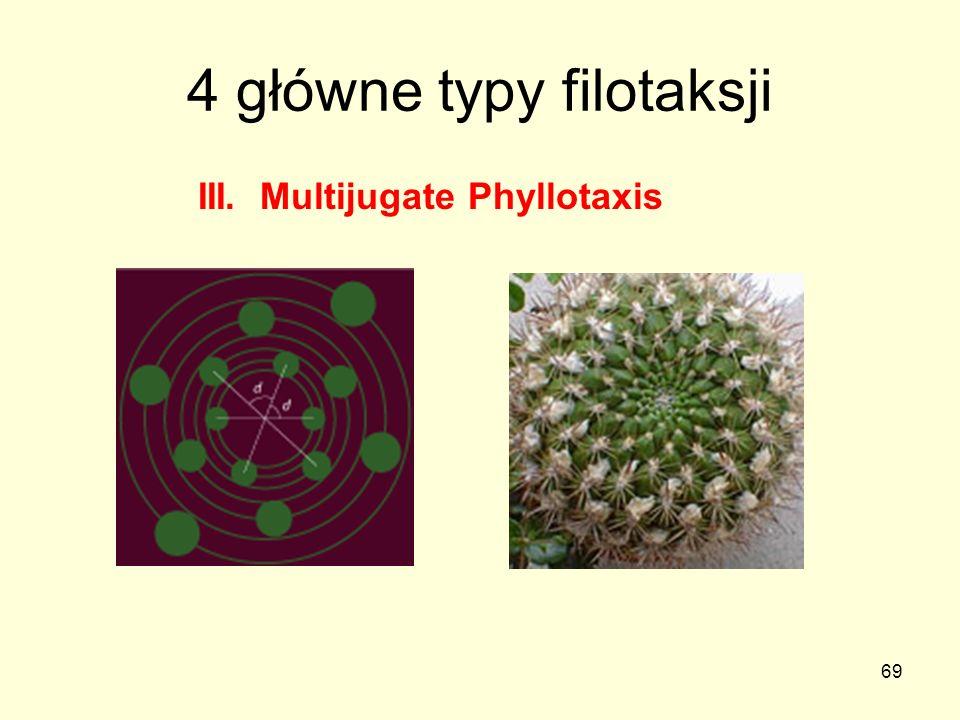 69 4 główne typy filotaksji III. Multijugate Phyllotaxis