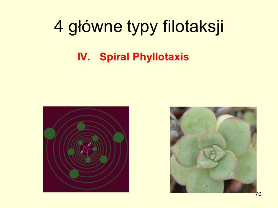 70 4 główne typy filotaksji IV. Spiral Phyllotaxis