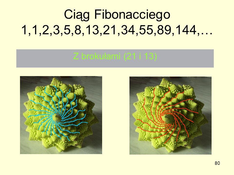 80 Ciąg Fibonacciego 1,1,2,3,5,8,13,21,34,55,89,144,… Z brokułami (21 i 13)